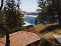 Shearwater on Norfolk Island, Norfolk Island - Click to enlarge